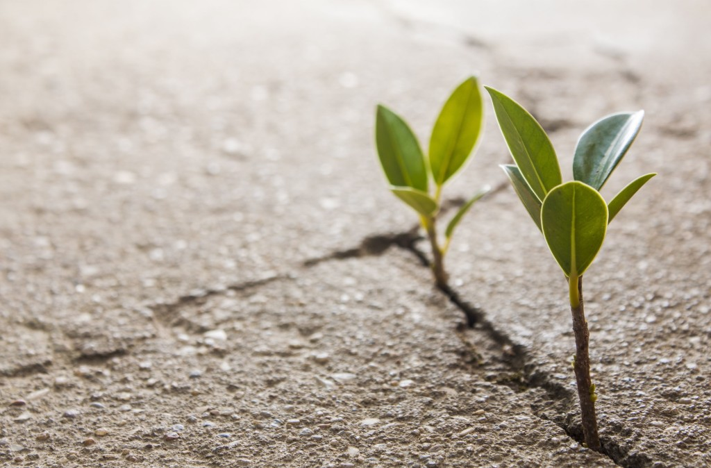 makro-rastenie-listik-rostok