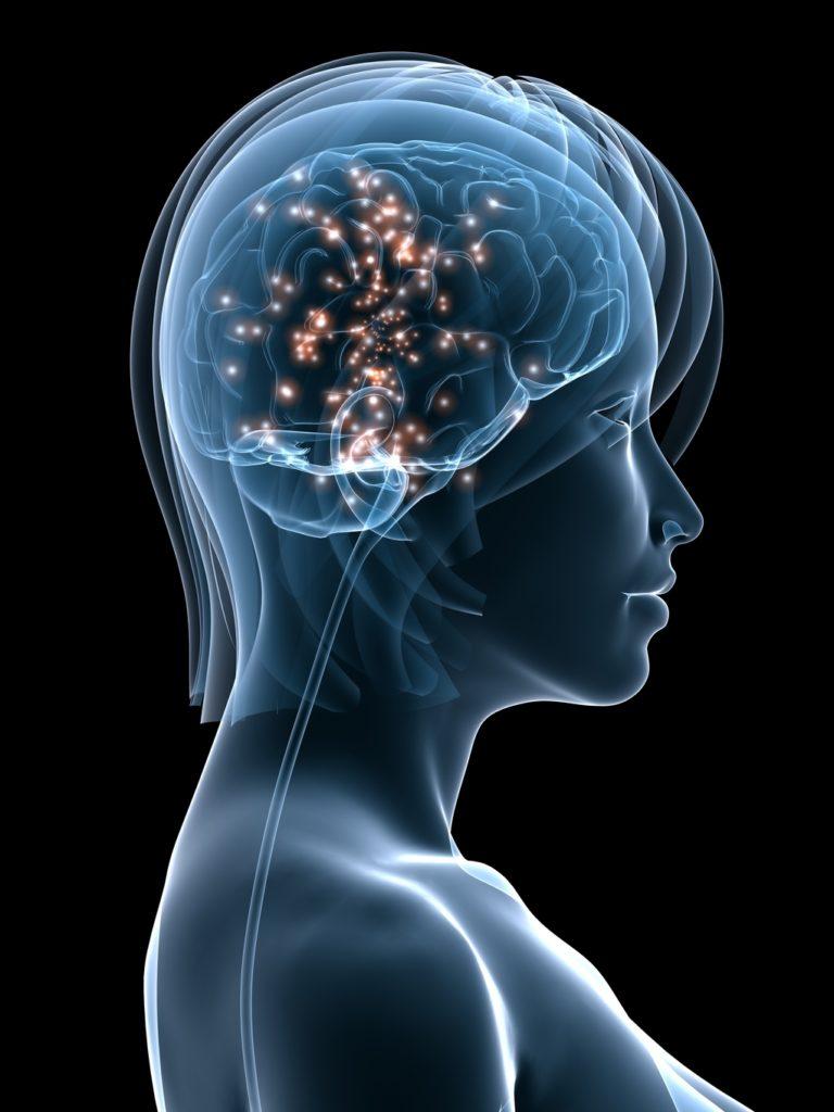 woman brain 2