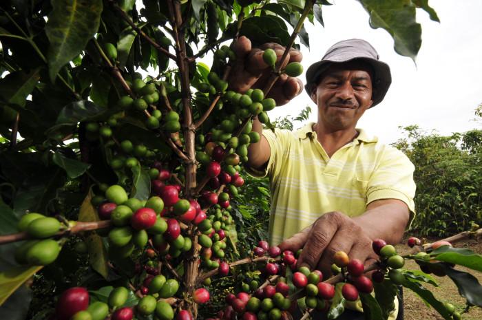 сборщик кофе